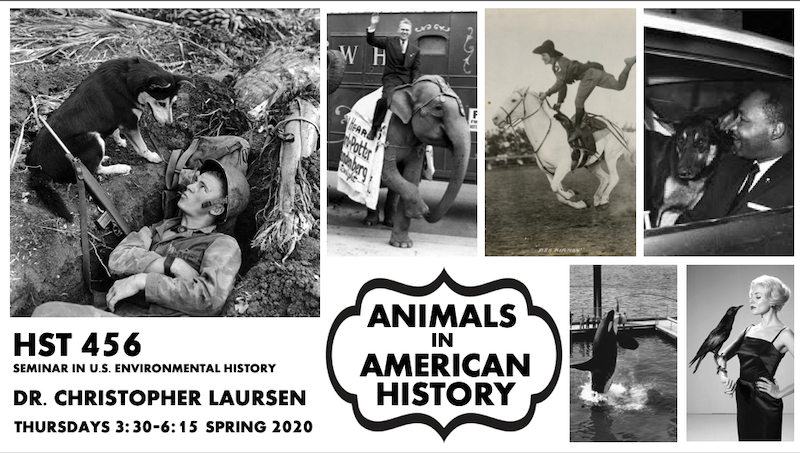 Poster for the course HST 456/533: Animals in American History features various historic images of animals and people.